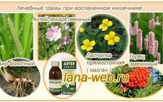 Лекарственные травы для кишечника