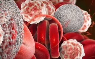 Глобулины в крови: виды