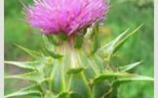 Лекарственные травы на букву Т