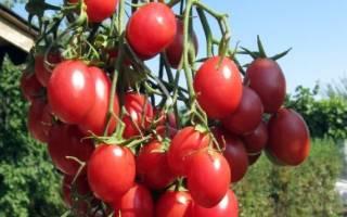 Все сорта помидоров с фото