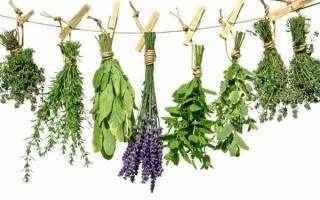 Успокоительные лекарственные травы