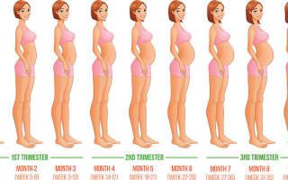 Месяцы беременности