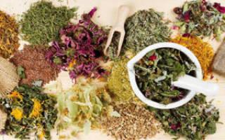 Лекарственные травы для иммунитета