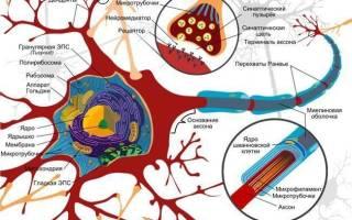 Аксональная полинейропатия