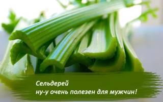Польза и вред сельдерея для мужчин и женщин